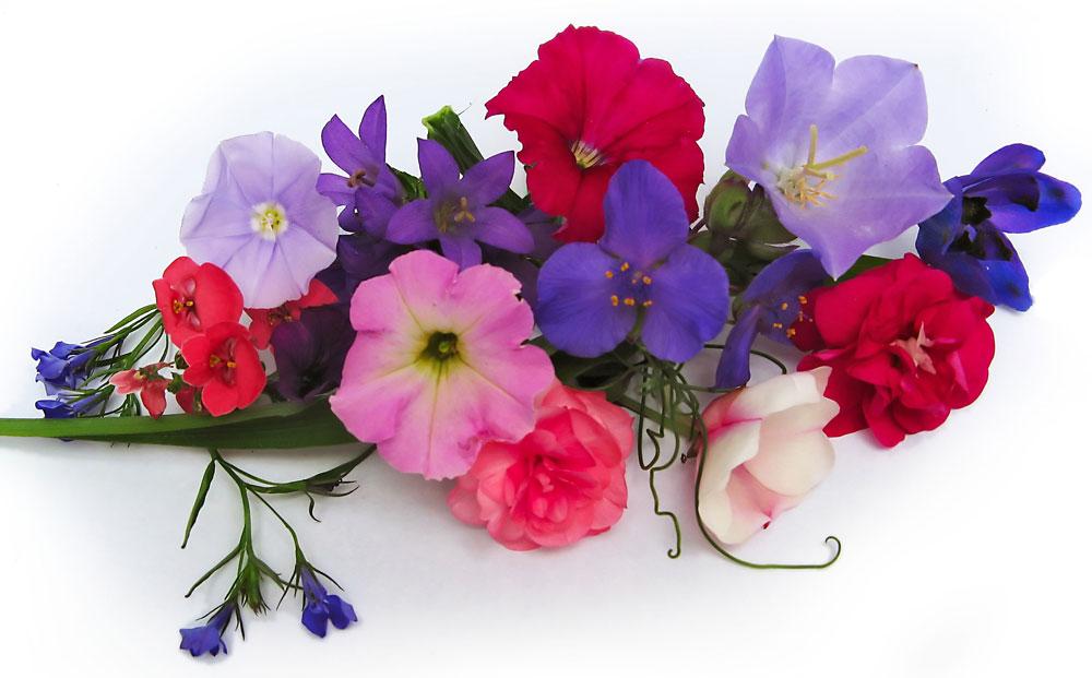 flores no jardim do amor:Marizete Cajaíba: MENSAGEM DE ANO NOVO / EM 2015 PLANTE UM JARDIM NO