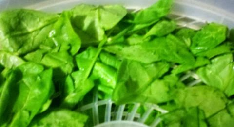 Making spinach powder at home, how to dehydrate spinach, how to use spinach powder, preserving spinach