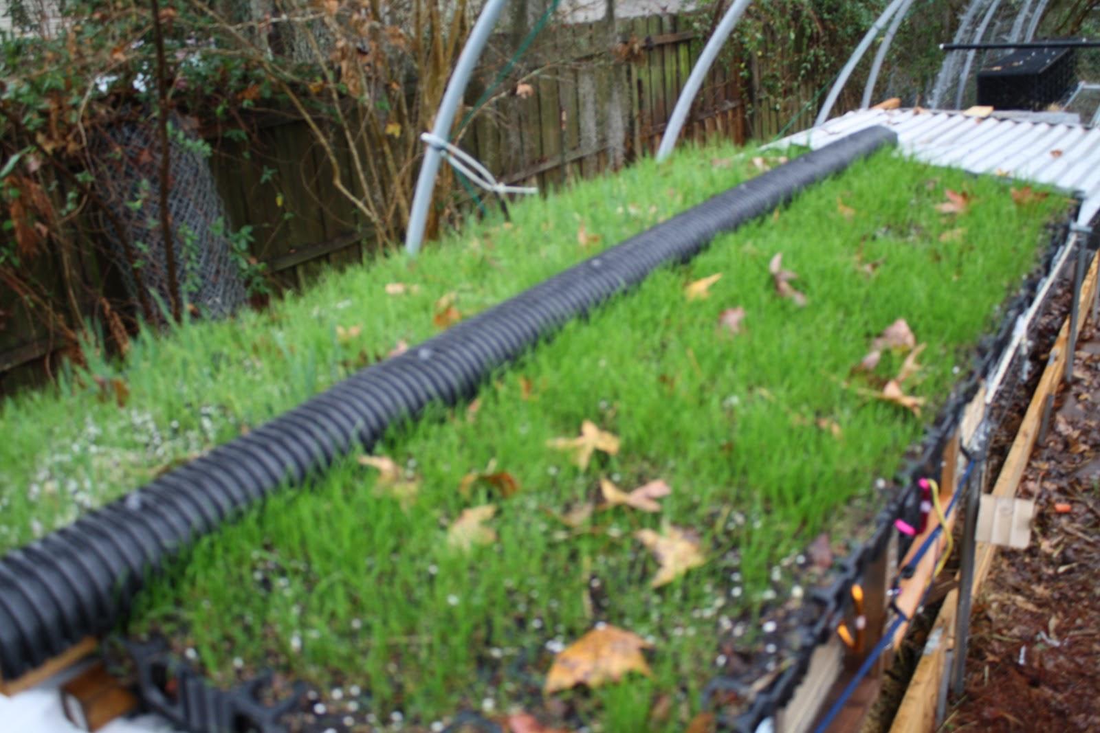 kevin songer rabbit on a stick green roofs fresh. Black Bedroom Furniture Sets. Home Design Ideas