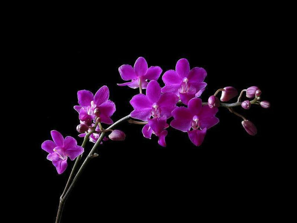Orchids residents welfare association different types of - White orchid flowers desktop wallpapers ...