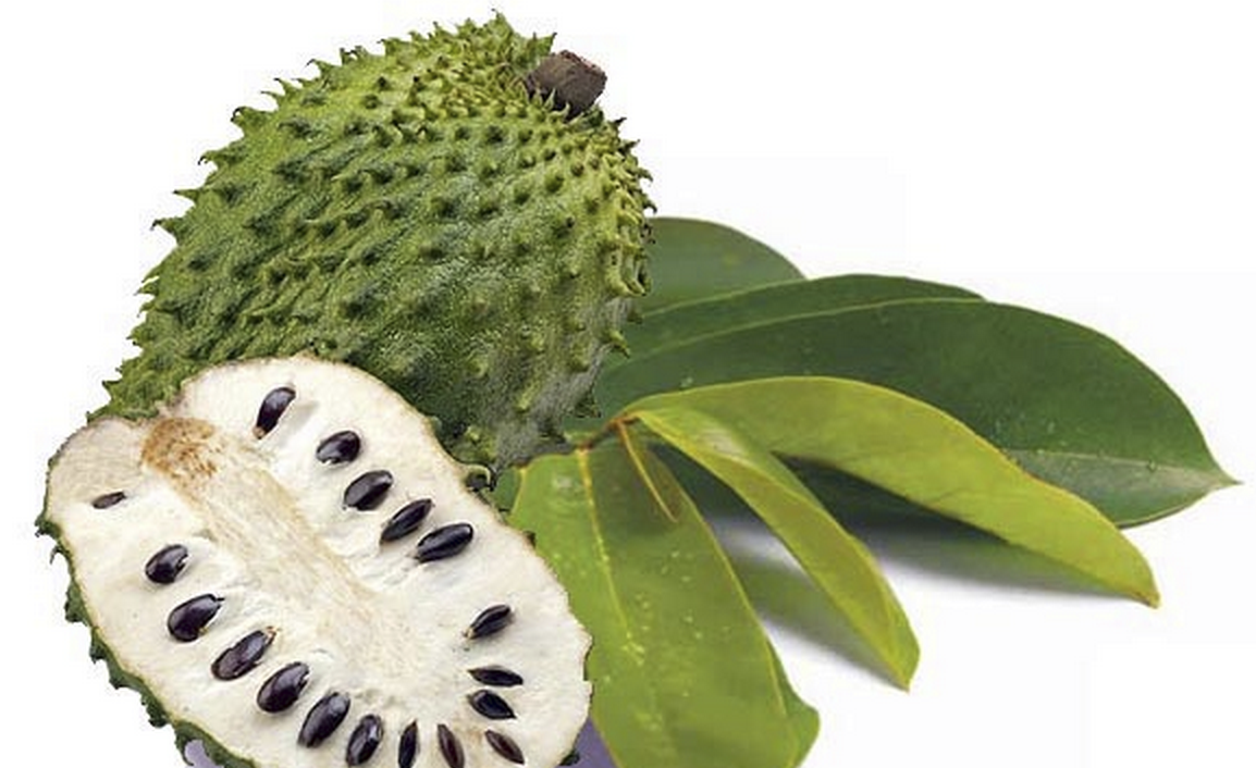 Is Graviola A Cancer Cure Essential Oil Outlet