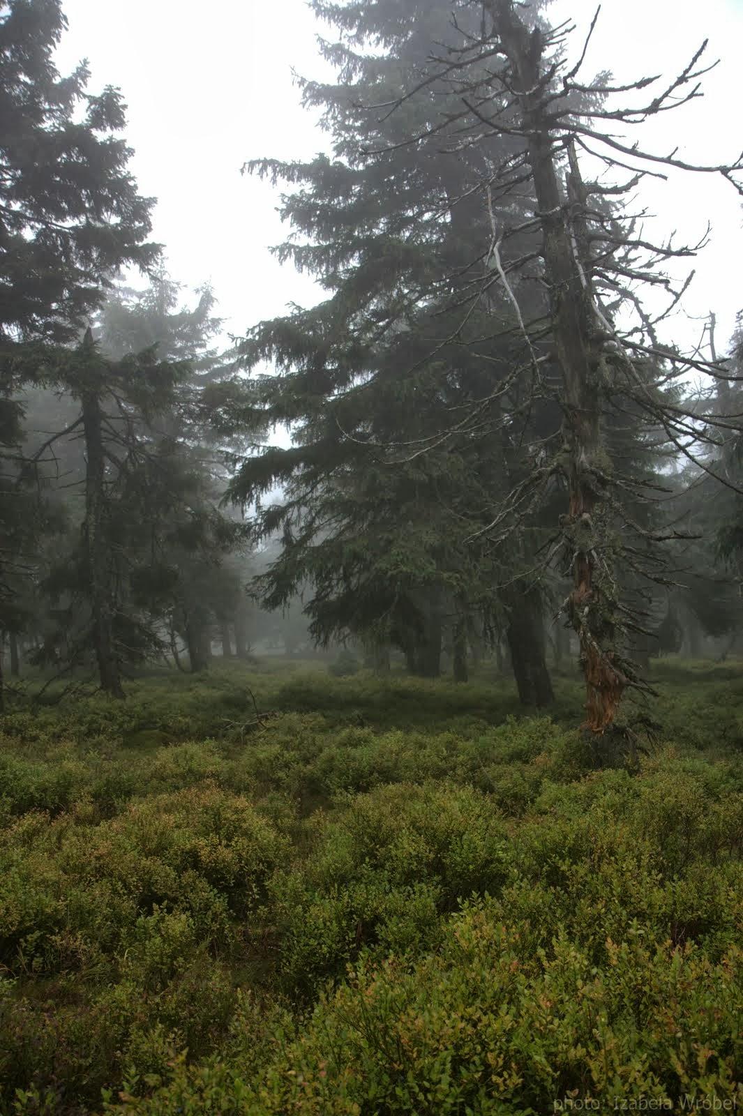 mgła dodała krajobrazom tajemniczości
