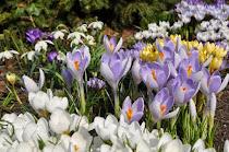 Kalendarz ogrodnika - KWIECIEŃ