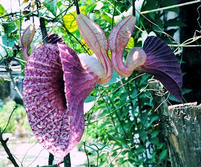Flores de otro planeta aquí en la tierra (Flores Pato)