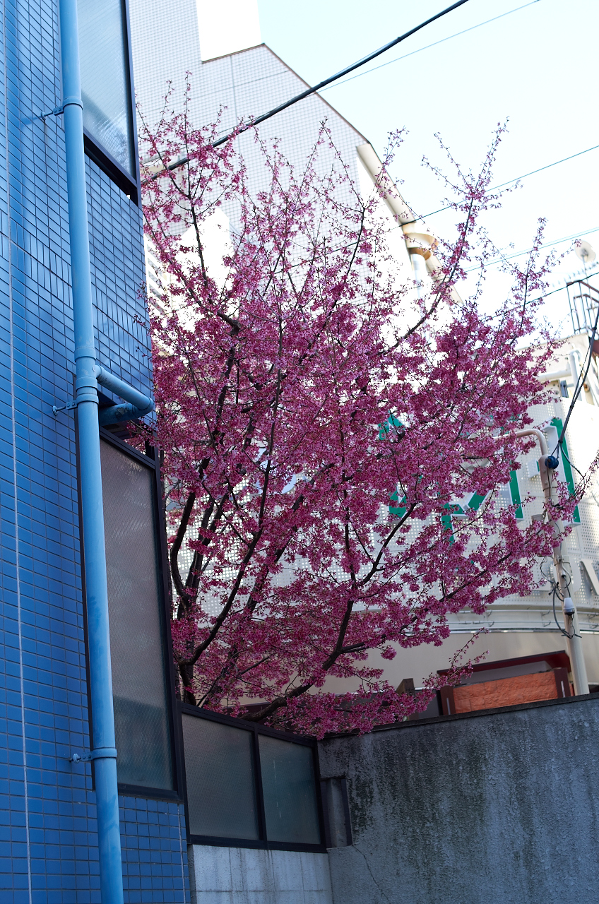 Shinjuku Mad - Days of carefreeness are merely a cherry blossom long 02