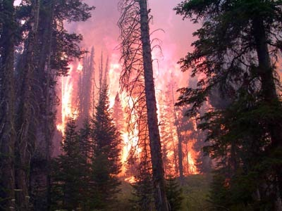 Wildfire scorches trees