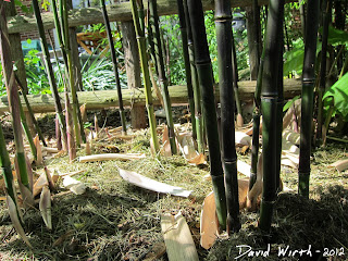 bamboo trees, mulch, roots, rhizomes, culms, grass