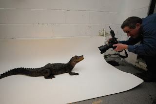 endangered animals photos, musky caiman