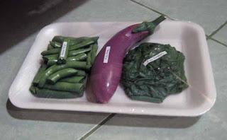 model makanan_replika makanan_standar peraga