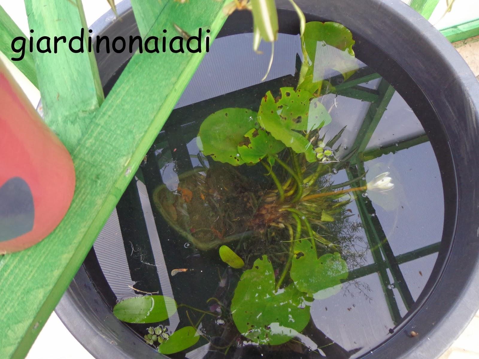 Il giardino delle naiadi uno specchio d 39 acqua al coperto for Vasche preformate per laghetto