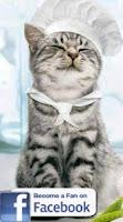 Pelle - gladni mačak