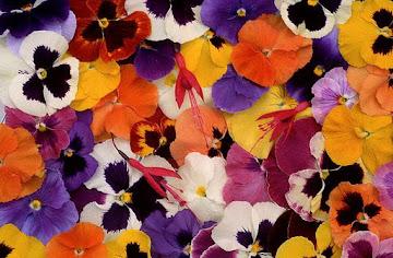 """""""Há flores por todos os lados, há flores em tudo que eu vejo.."""""""