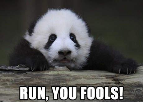 Run You Fools