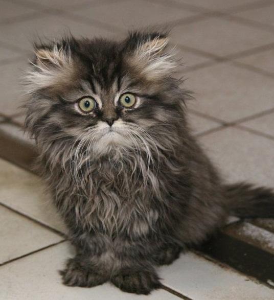 глисты у кошек симптомы лечение.