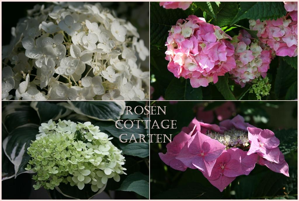 rosen cottage garten gartenlust gartenfrust im august. Black Bedroom Furniture Sets. Home Design Ideas