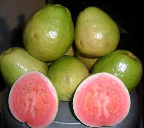 khasiat-manfaat-buah-jambu-biji