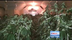 Marijuana Drug Bust - 400 Plants In House - Pearland Tx