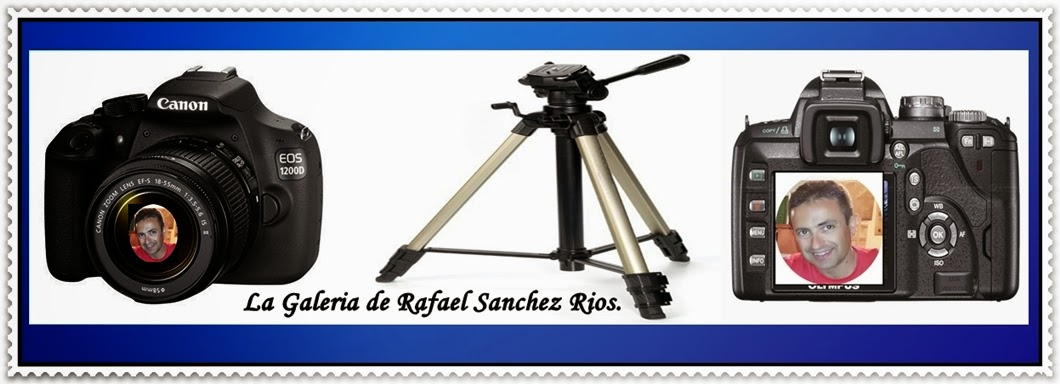 La Galeria de Rafael Sanchez Rios