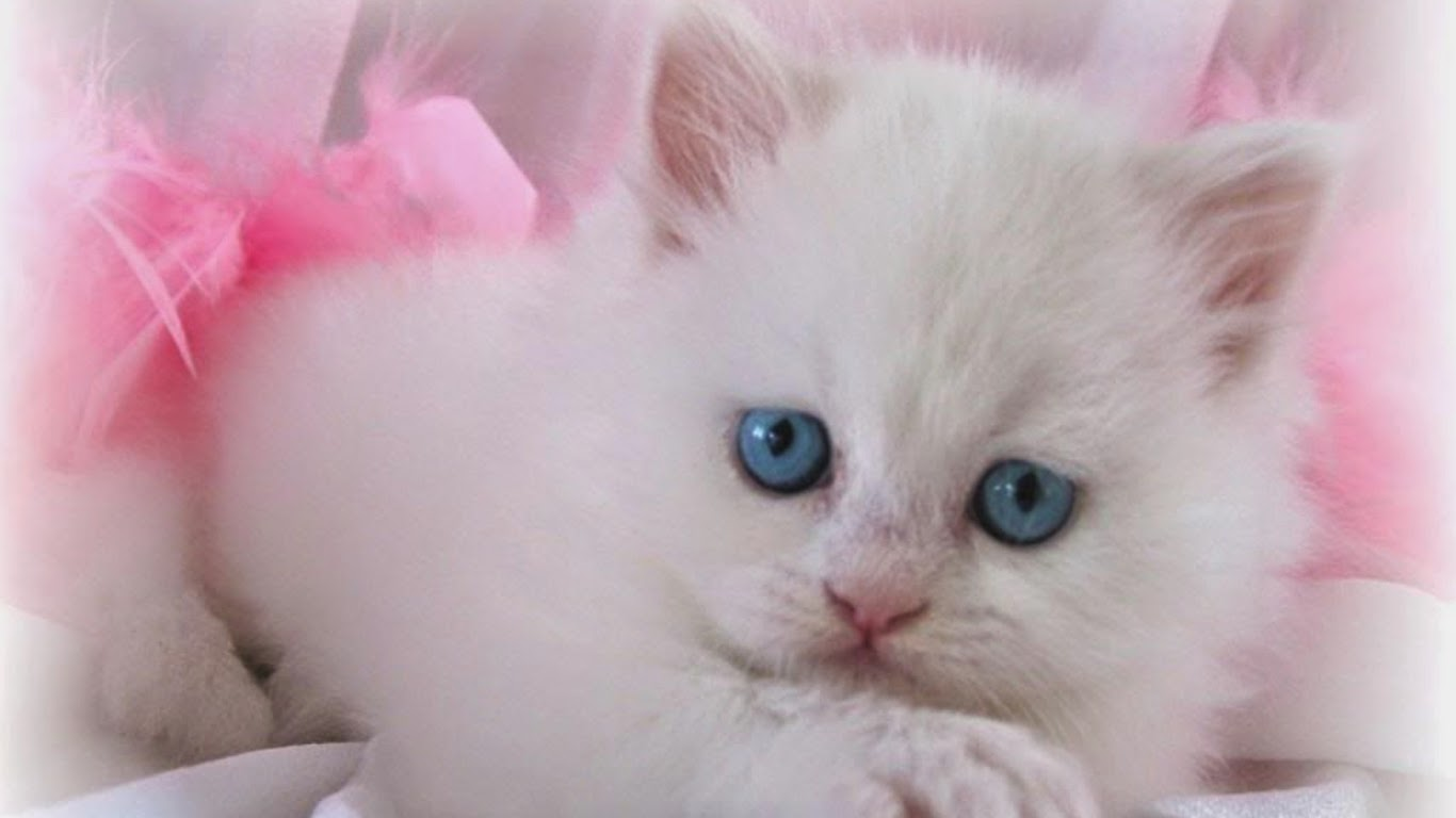 Lovable Images: Cute Cat WallPapers Free Download ...