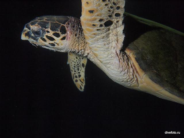 Морская черепаха ночью