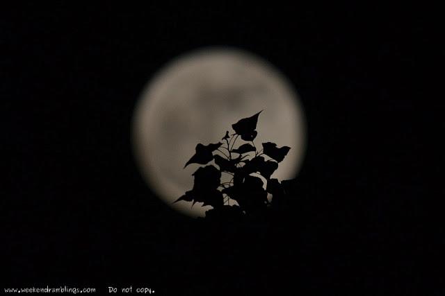 Weekend Ramblings Snapshot Love Shadows in The Moon