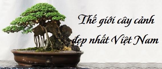 cay canh dep, cay canh dep bonsai banner giua