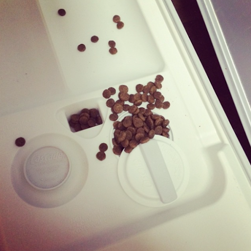 dog-food, dog-food-fail, fail, dishwasher-fail