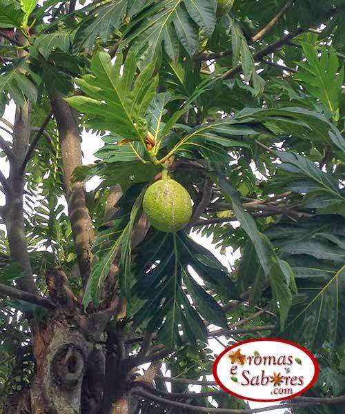 árvore de fruta pão