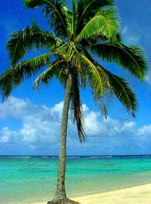 Ada apa dengan pohon kelapa..??