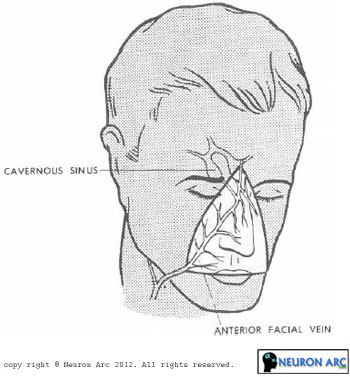 The danger area of the face