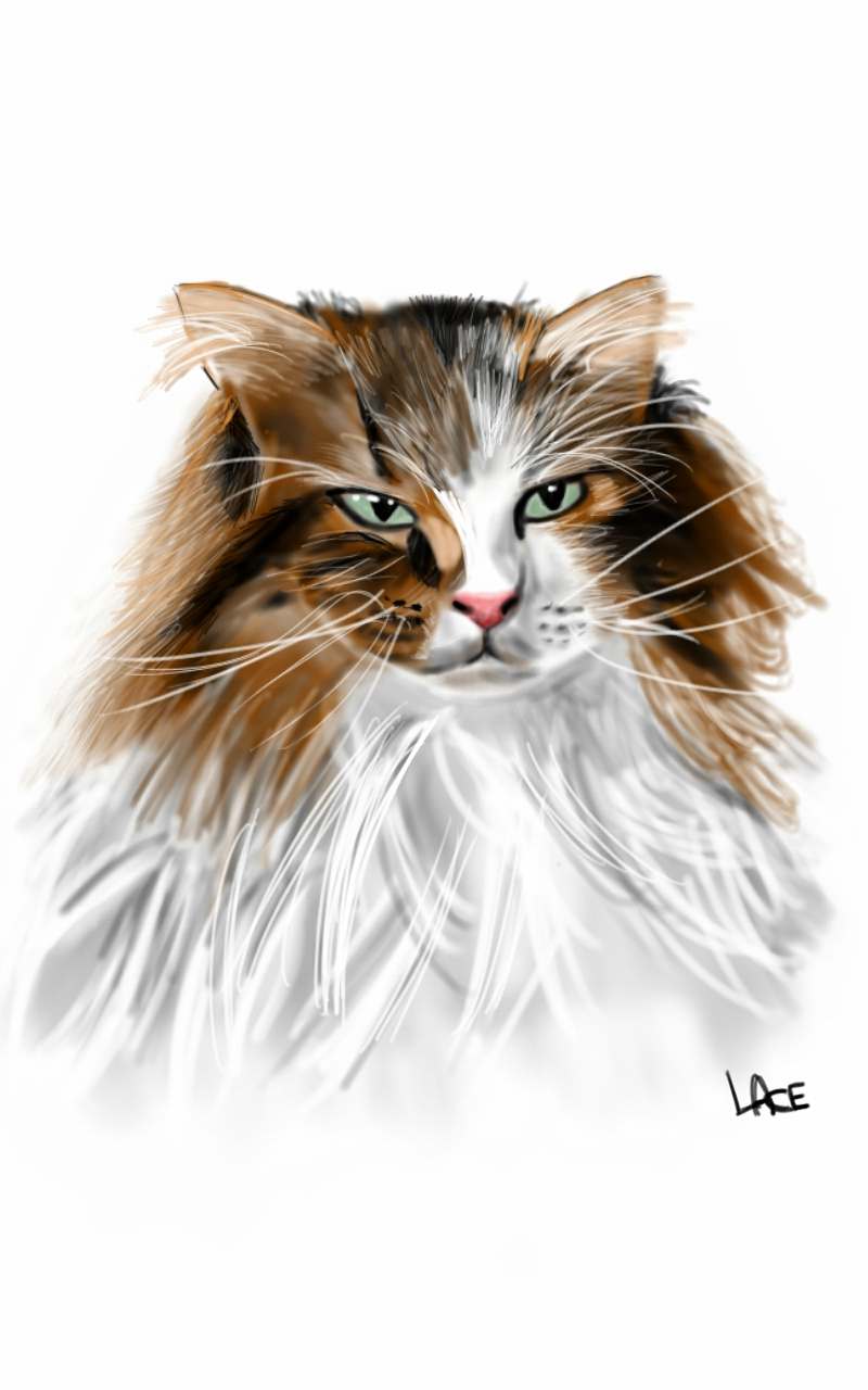 Dessin chat sur sketchbook pro galaxy note