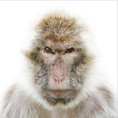 Инопланетяне среди нас обезьяна. Человеческий взгляд обезьяны.