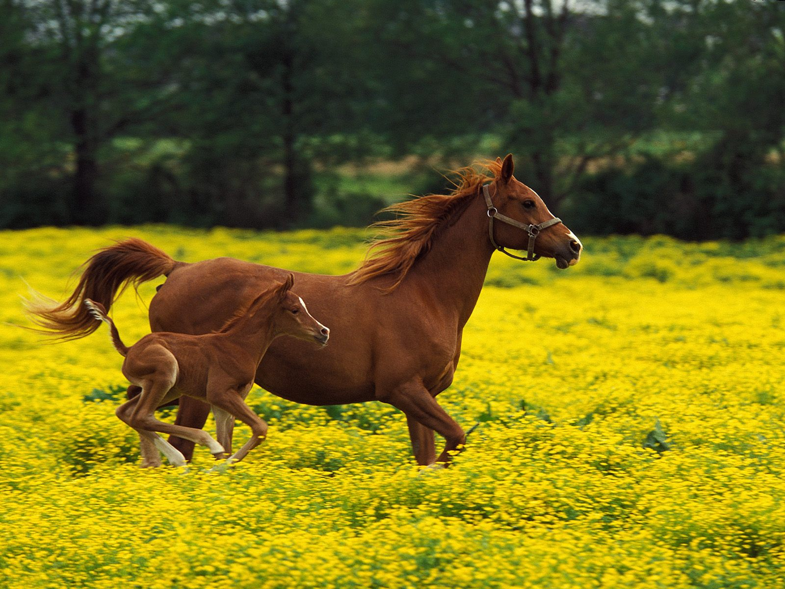 Cool   Wallpaper Horse High Quality - horse+wallpapers+hd+(15)  Photograph_312474.jpg