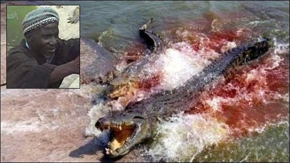 Domador é devorado por crocodilos
