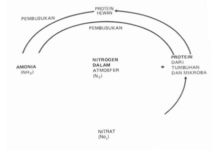 Pengertian daur biogeokimia nitrogen karbon fosfor sulfur dan gambar 96 daur nitrogen ccuart Image collections