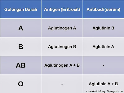 Materi Pelajaran Tentang Golongan Darah A.B.O , Rhesus, MN.