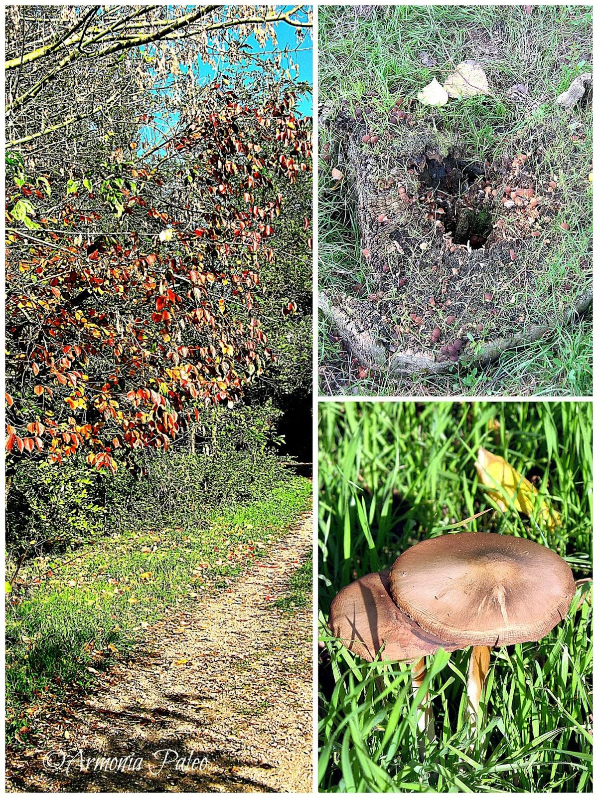 Novembre 2013 - Vellutata di Funghi con Noci e Pancetta di Armonia Paleo