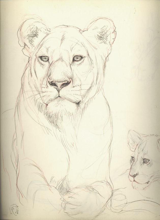 Le blog d 39 lizabeth - Croquis animaux ...