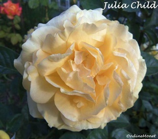 Julia Child Summer 2012