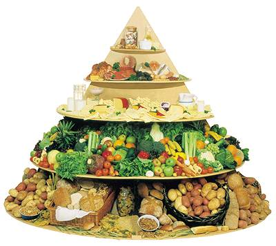 food pyramid. wallpaper blank food pyramid