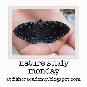 http://fisheracademy.blogspot.com/2013/11/naturally-its-november-nsm-linkup.html