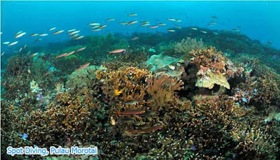 Diving Pulau Morotai