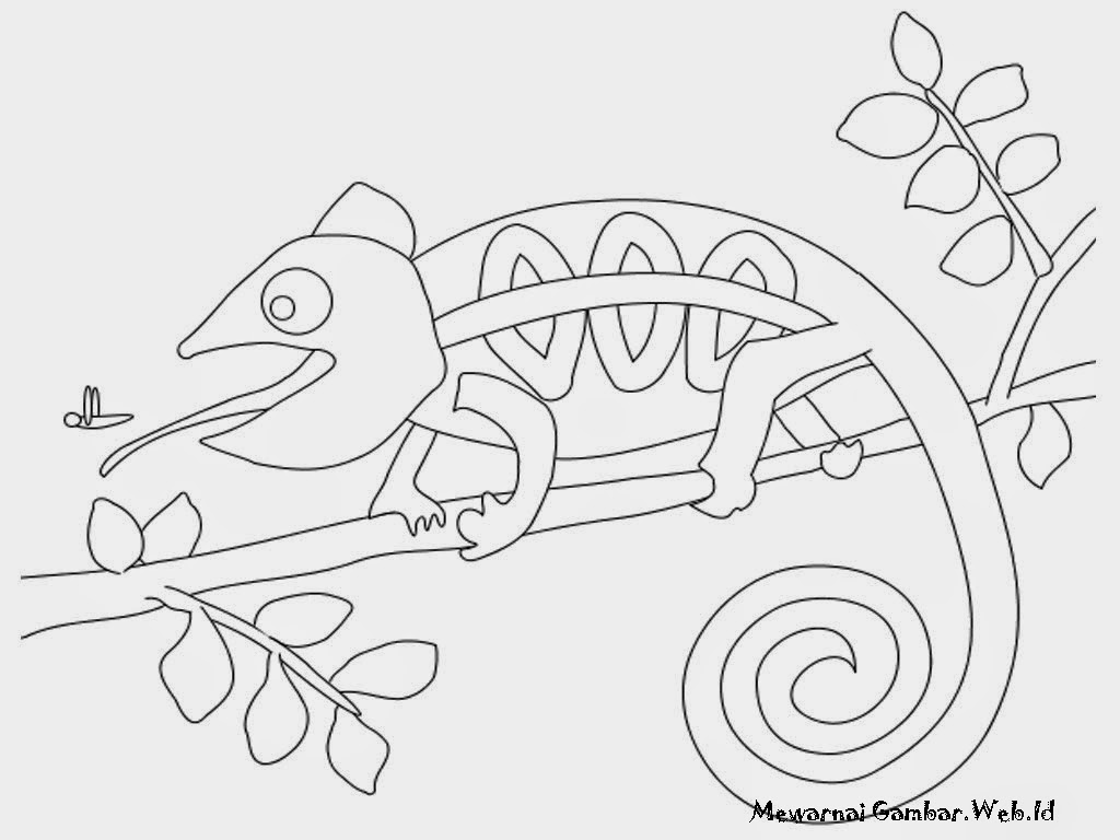 Gambar Iguana Berburu Serangga