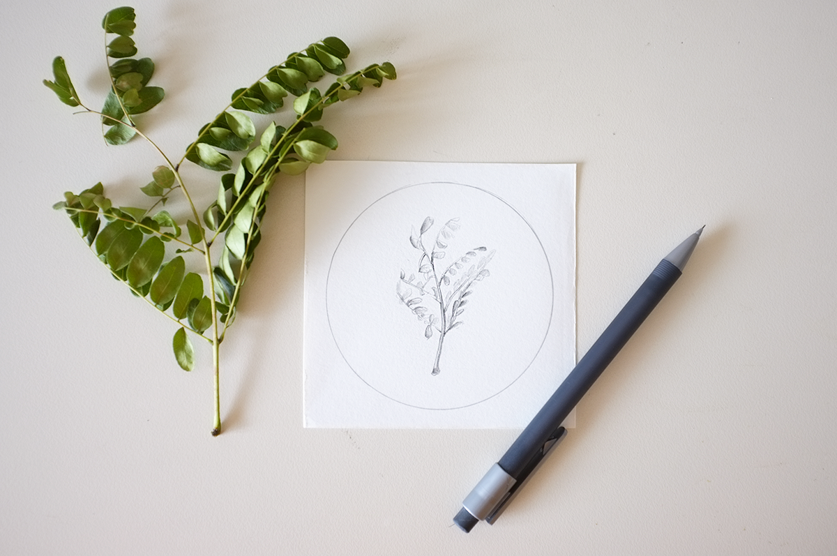 http://thetendergarden.blogspot.co.nz/2015/04/how-to-geometric-plants-drawing-studies.html