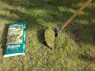 Jak i kiedy posadzić drzewo - czereśnię