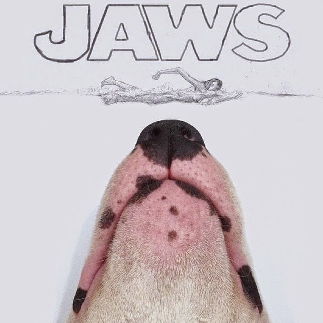 Dog owner has creative fun with his bull terrier (16 pics), Jimmy Choo the bull terrier, famous Instagram dog, funny dog illustrations