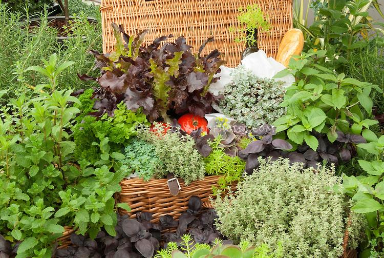 arte y jardinerÍa : plantas aromÁticas. como diseÑar un jardin