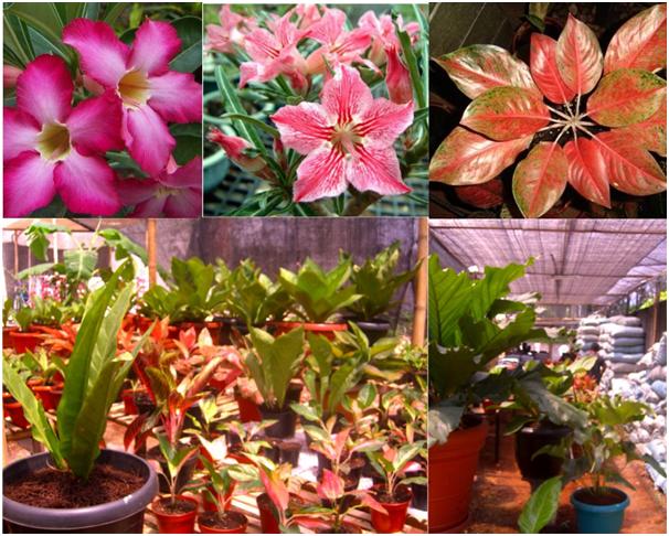 Various Ornamental Plants