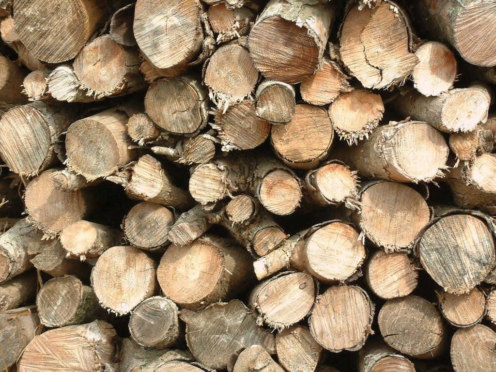 Los recursos del bosque la madera de sabina y su aprovechamiento - Madera de pino ...