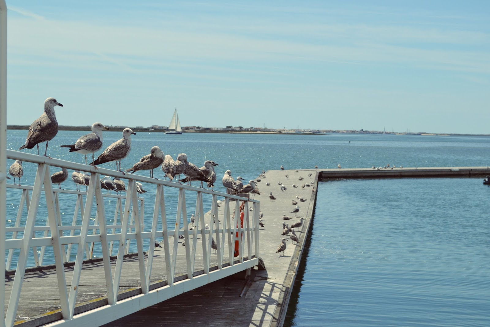 seagulls in olhao portugal